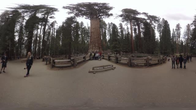 vídeos y material grabado en eventos de stock de view of the 'general sherman', sequoia national park. - parque nacional de secoya