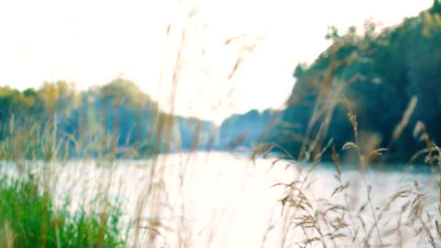 view of the isar through grass - grigliare video stock e b–roll