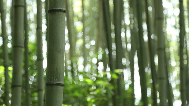 view of the juknokwon (bamboo grove in damyang, south korea) - damyang stock videos & royalty-free footage