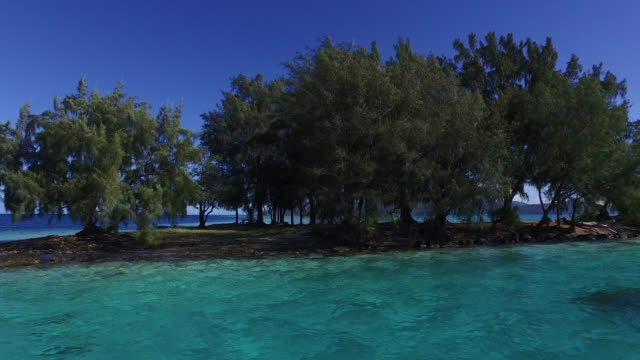 view of the lagoon with trees - isola di tahaa video stock e b–roll
