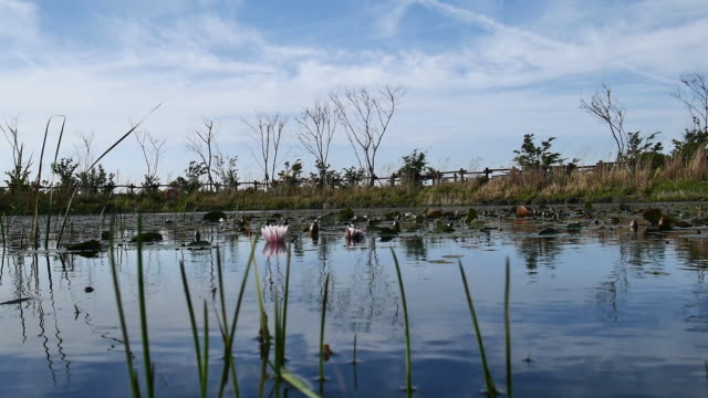 view of the lotus pond at hallasan national park in jeju island - naturwunder stock-videos und b-roll-filmmaterial