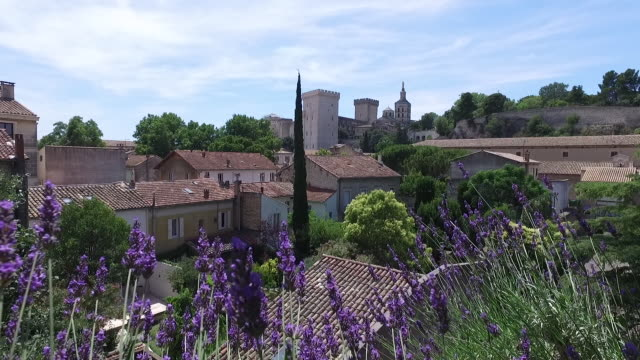 view of the palace of the popes with lavender foreground - provence alpes cote d'azur stock videos & royalty-free footage