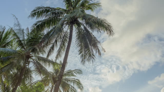 view of the palms and chair in phuket, thailand - phuket stock videos & royalty-free footage