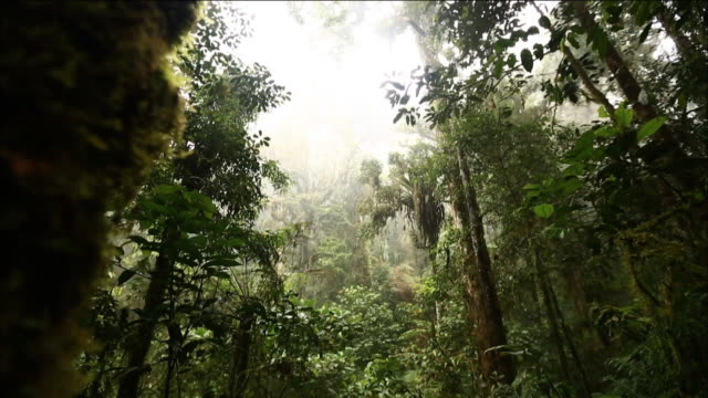 view of the rainforest in papua new guinea - papua new guinea stock videos & royalty-free footage