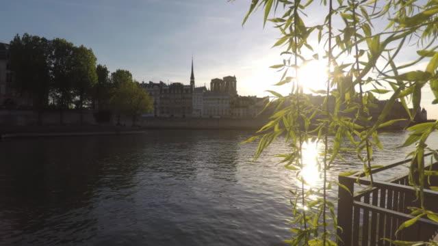 view of the seine in paris - trauerweide stock-videos und b-roll-filmmaterial