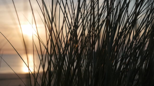 View of the setting sun at the beach through marram grass
