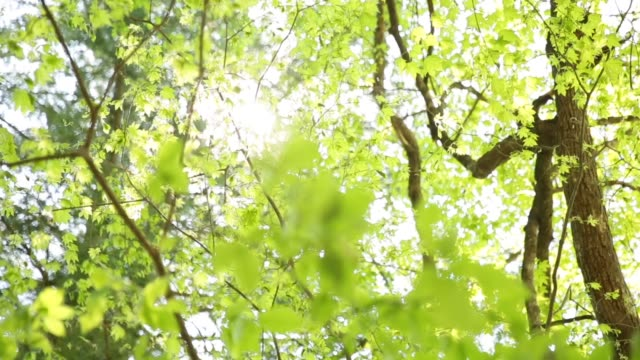 view of the tree branches covered with the sky - copertura di alberi video stock e b–roll