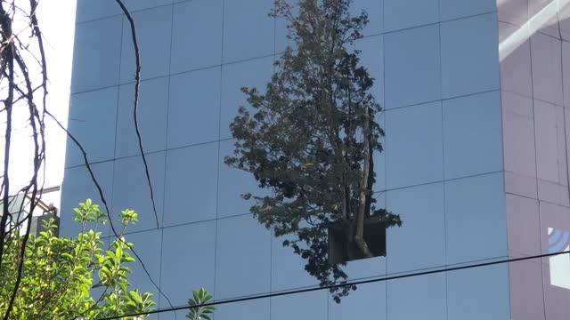 """view of the unusual skyscraper known as """"edificio del arbol"""" on december 29, 2020 in mexico city, mexico. precursor of actual environmental concerns,... - green colour stock videos & royalty-free footage"""