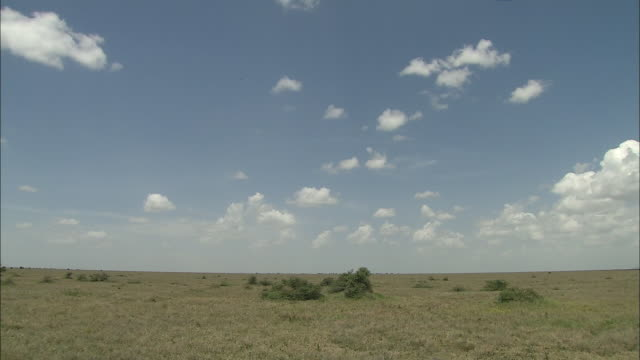 view of the wide plain in serengeti national park, tanzania - grass area stock videos and b-roll footage