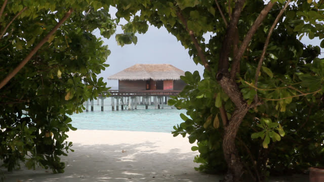 view of thicket gate to maldives beach and resort - strohdach stock-videos und b-roll-filmmaterial