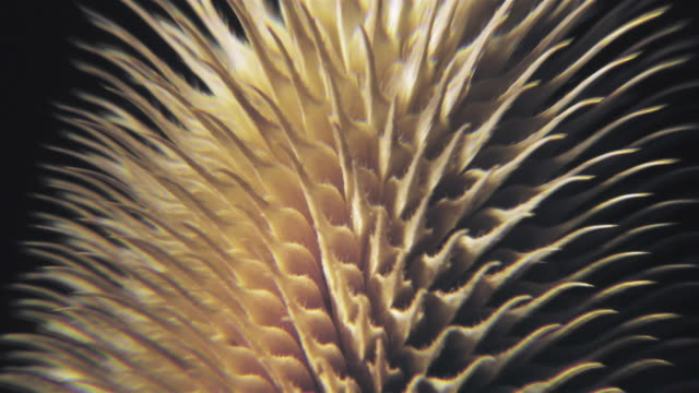 ms  zo view of  thistle plant /  bandon, oregon, usa - sharp stock videos and b-roll footage