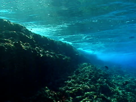 View of tide hitting coral from underwater