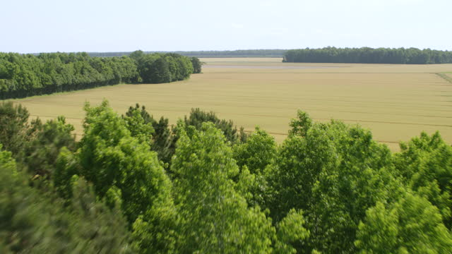 ws tu aerial pov view of tobacco field over trees / craven county, north carolina, united states - tobacco crop stock videos & royalty-free footage