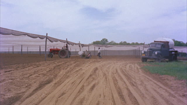 ms pov view of tobacco field - tobacco crop stock videos & royalty-free footage