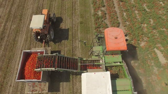 aerial view of tomato harvest in late summer - tomato video stock e b–roll