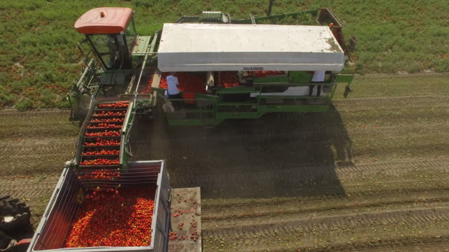 aerial view of tomato harvest in late summer - harvesting stock videos & royalty-free footage
