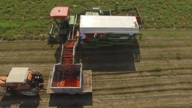 AERIAL view of tomato harvest in late summer
