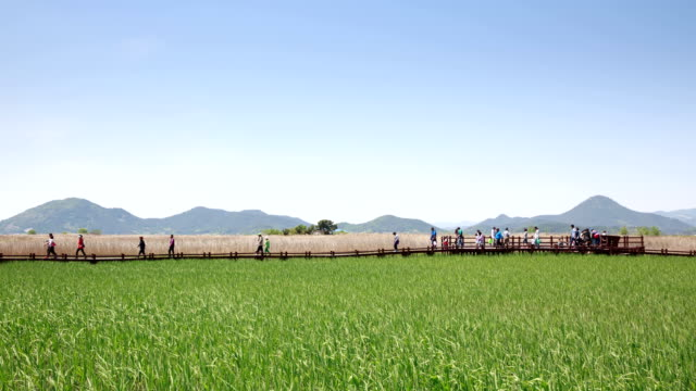 view of tourists at suncheon bay ecological park - besichtigung stock-videos und b-roll-filmmaterial