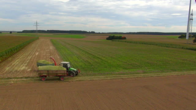 ws aerial td tu view of tractor harvesting corn at medium sized cornfield / ulm, bavaria, germany - geografische lage stock-videos und b-roll-filmmaterial
