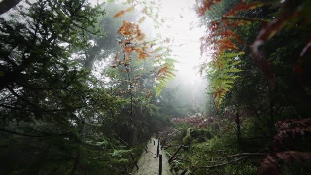 木の枝や葉のビュー - シュバルツバルト点の映像素材/bロール