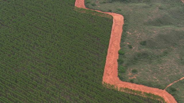 vídeos de stock, filmes e b-roll de ws aerial view of tree farm / minas gerais, brazil - estrada rural