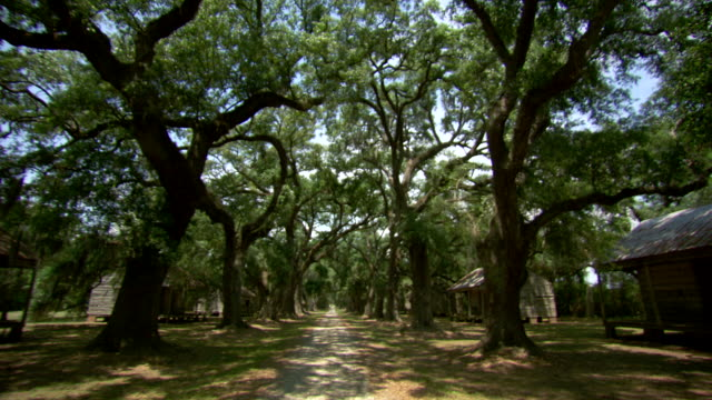 WS POV View of tree lined path next to old slave quarters / New Orleans, Louisiana, United States