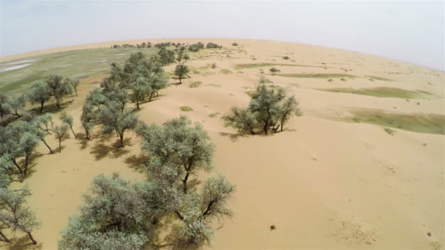 WS AERIAL View of tree near lake in Tengger Desert/Alashan, Inner Mongolia, China.