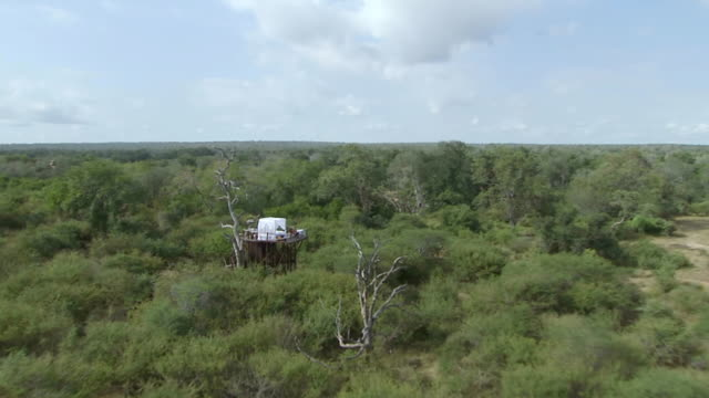 vídeos de stock, filmes e b-roll de ws aerial view of treehouse in bushes / mpumalanga, south africa - treehouse