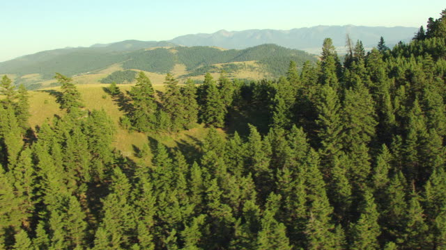 ws aerial view of trees along ridge to valley in national bison range / montana, united states - なだらかな起伏のある地形点の映像素材/bロール