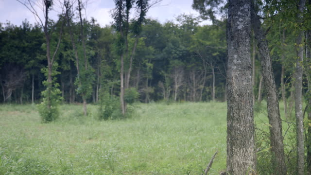 WS View of trees and grass in forest / Nashville, Tennessee, United States