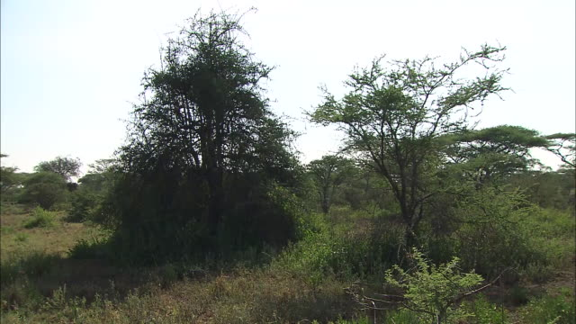view of trees and grassland in serengeti national park, tanzania - national grassland stock videos & royalty-free footage