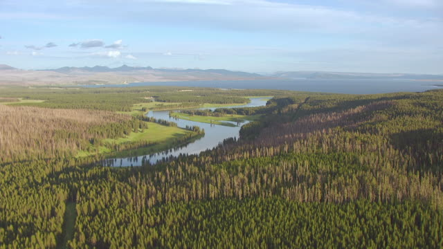 WS AERIAL View of Trees and river to Yellowstone Lake in Hayden Valley in Yellowstone National Park / Wyoming, United States