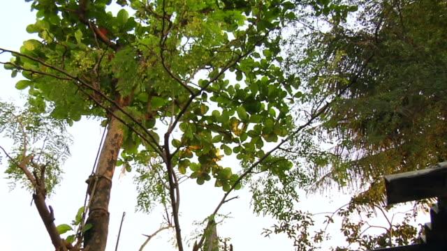 ws td pan view of trees besides garbage / mumbai, maharashtra, india - キャンプ用ストーブ点の映像素材/bロール