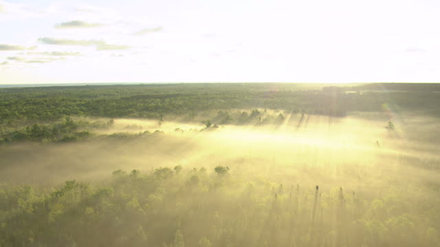 WS AERIAL View of trees covered in fog and sunshine during sunrise in Cheboygan County / Michigan, United State