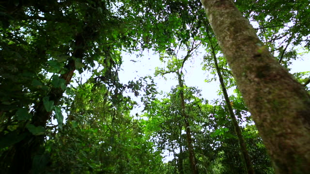 view of trees in a jungle in madagascar - madagaskar stock-videos und b-roll-filmmaterial