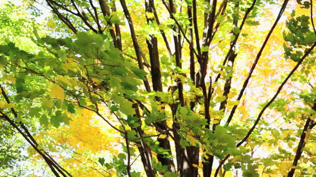 ms td view of trees in a park  / toronto, ontario, canada - kelly mason videos stock-videos und b-roll-filmmaterial