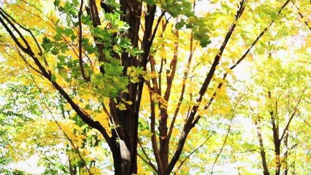 ms tu view of trees in a park  / toronto, ontario, canada - kelly mason videos video stock e b–roll