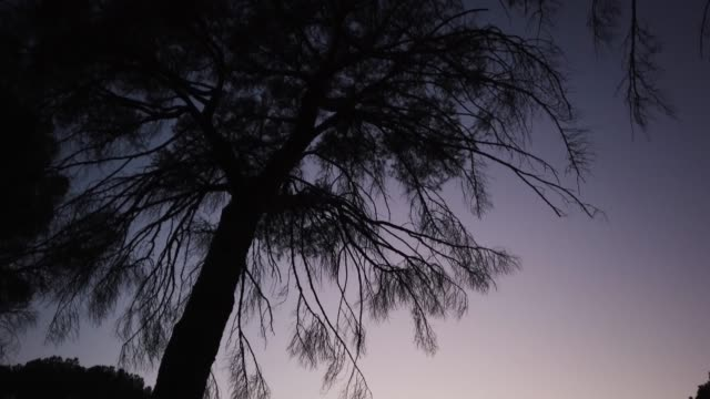 view of trees in casa de campo at sunset on october 14 2020 in madrid spain the casa de campo is madrid's largest public park which was originally a... - mindfulness stock videos & royalty-free footage