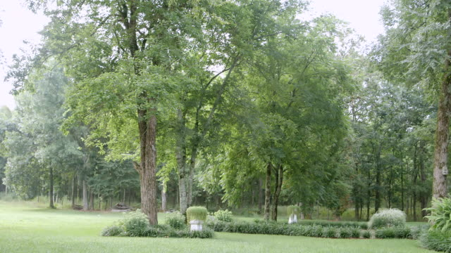 ws view of trees in park / chattanooga, tennessee, united states - chattanooga stock videos and b-roll footage