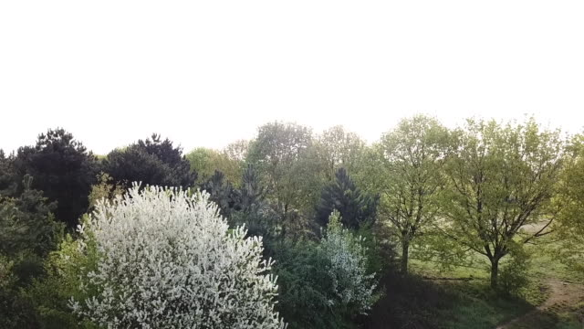 view of trees in spring, by drone