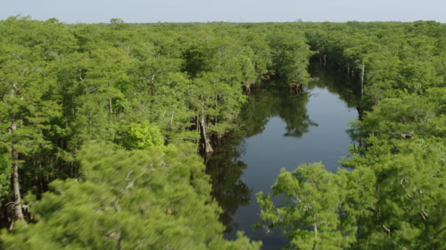 ws aerial pov view of trees in swamp area / conway, south carolina, united states - swamp stock videos & royalty-free footage