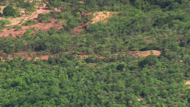 ms aerial zo view of trees / minas gerais, brazil - minas stock videos and b-roll footage