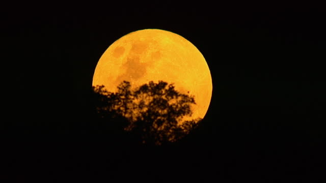 vídeos de stock, filmes e b-roll de ws aerial view of trees silhouetted against big bright moon / rustenburg, north west province, south africt - ominoso