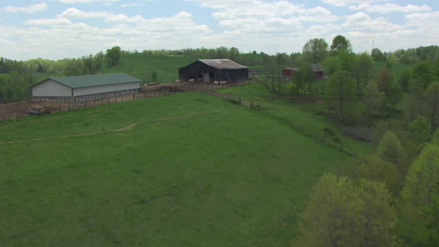 ws aerial view of trees to barn on hillside / kentucky, united states - rolling landscape stock videos & royalty-free footage