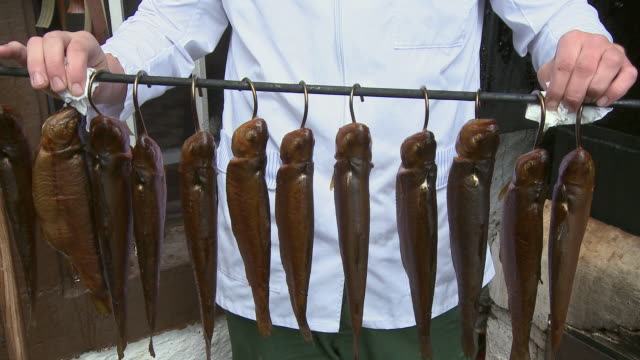 vídeos de stock, filmes e b-roll de cu  view  of trout smokery / trassem near saarburg, rhineland-palatinate, germany - grupo mediano de animales