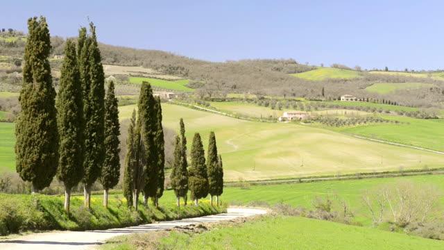 WS View of Tuscany landscape with Cypress tree avenue / Pienza, Tuscany, Italy