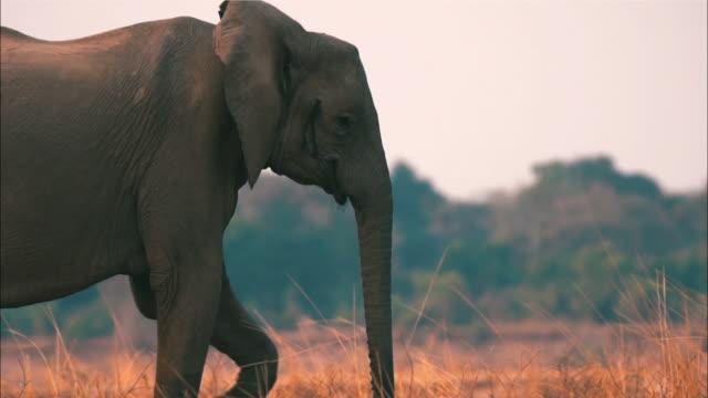 View of two elephants walking through Masai Mara National Reserve