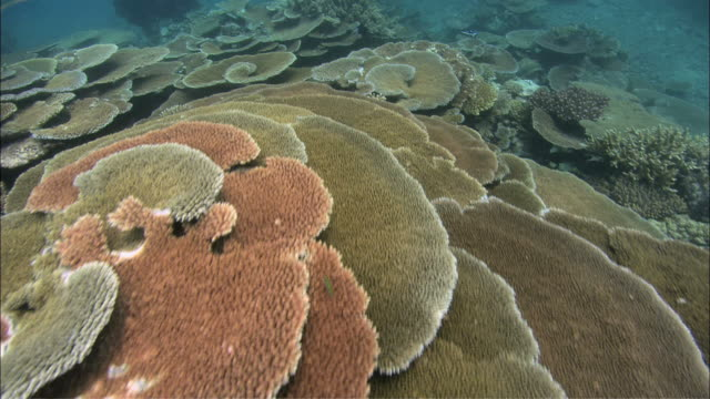 MS POV View of underwater coral reef / Australia