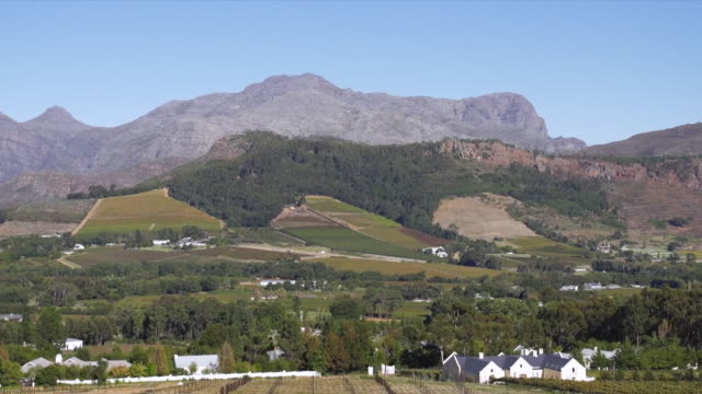 ws tu view of vineyard and mountains / franschhoek, western cape, south africa - franschhoek stock videos and b-roll footage