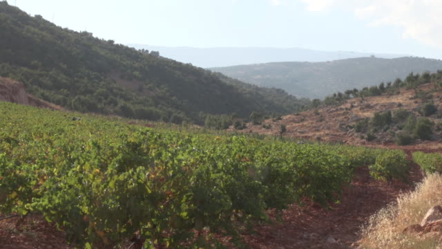 view of vineyard and the surrounding countryside in the beqaa valley. - viniculture stock videos & royalty-free footage